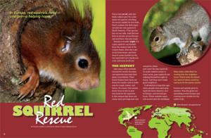 RedSquirrels-1_479x314